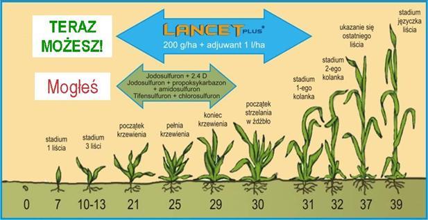 Nowe standardy ochrony zbóż przed chwastami