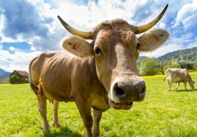 Wpływ higieny w budynkach inwentarskich na zdrowotność zwierząt