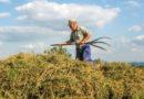 Bezpieczne lato w gospodarstwach rolnych