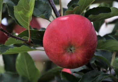Poradnik ogrodnika: jesienne nawożenie roślin