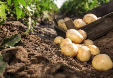 Podstawy ekologicznej ochrony warzyw